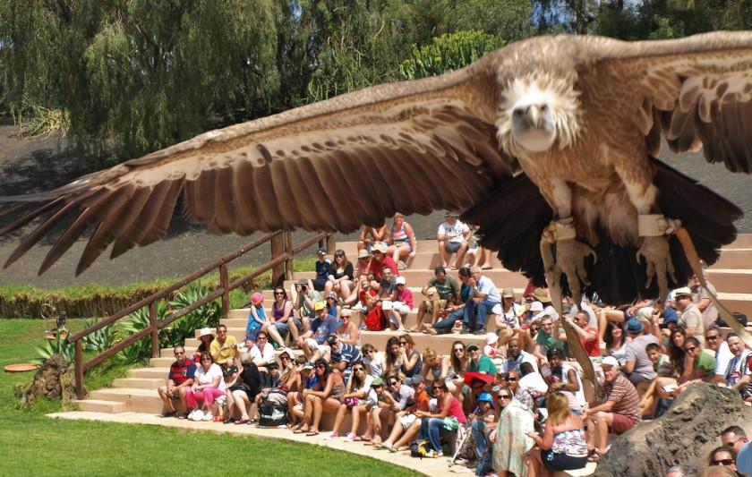die Raubvögel Show im Rancho Texas Park